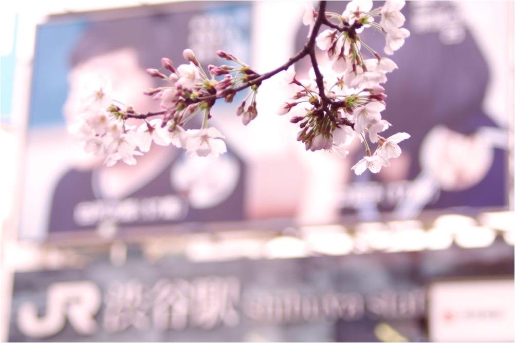 マッサージin渋谷☆桜咲く季節のおススメ♪W美脚50分3300円☆
