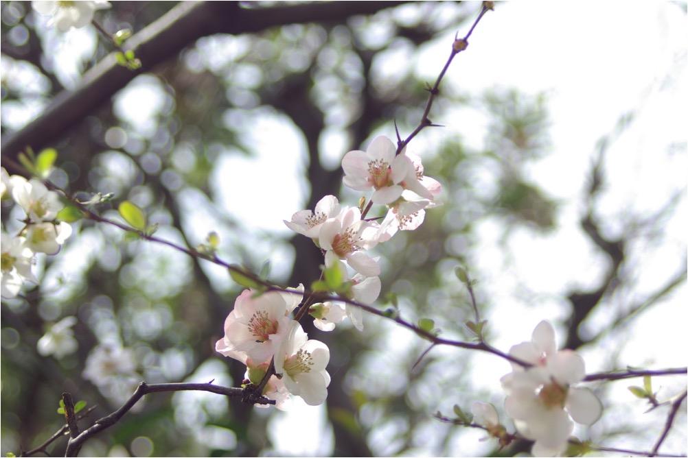 マッサージin渋谷☆春分の日☆リンパトリートメント50分3390円♪